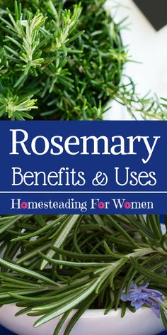 Rosemary Herb Health Benefits and it's uses. I never knew one of these benefits before.