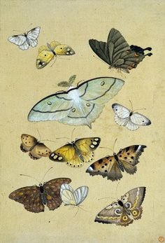 butterflies / album: various insects / watercolour on paper / japan / 19th century