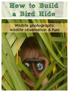 How to build a bird hide using cuttings from a garden clean up.