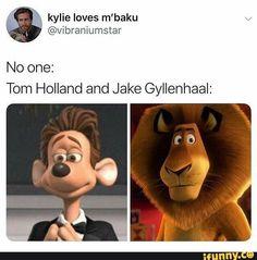 Tom Holland 🇳🇱 and jake gyllenhaal Funny Marvel Memes, Dc Memes, Marvel Jokes, Funny Memes, Hilarious, Marvel Avengers, Marvel Comics, Marvel Actors, Carl Y Ellie