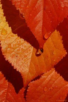 """""""L'automne est le printemps de l'hiver"""" Henri de Toulouse-Lautrec"""