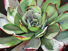 Succulent Watercolor by Fei Liu seen at Fine Art America