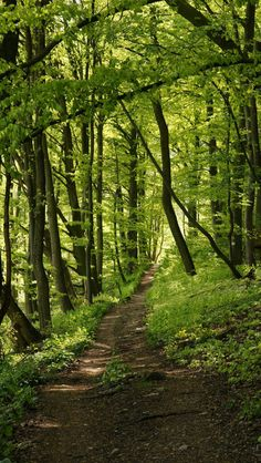 Spring along a path source Flickr.com