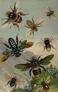 Beautiful exotic bees, the frontispiece of Curiosities of Entomology, published by Groombridge and Sons, 1871 | Archive.org