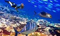 The best dives for beginners in Mauritius