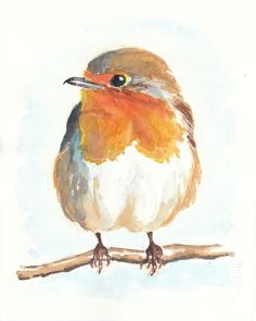 images of english robin - Bing Images
