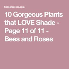 10 Gorgeous Plants that LOVE Shade - Page 11 of 11 - Bees and Roses