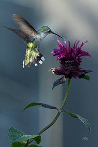 Hummingbird Photograph - Smiles In The Garden by Everet Regal
