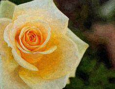 Digital Oil Painting of Yellow Rose