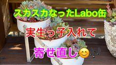 寄せ植えの季節到来‼️ - YouTube Succulent Care, Succulents, Youtube, Plants, Succulent Plants, Plant, Youtubers, Youtube Movies, Planets