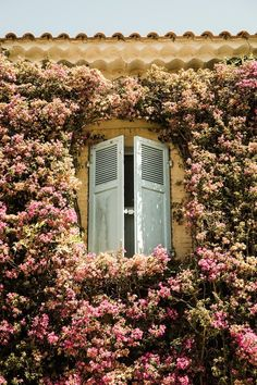 French shutters and flowers.
