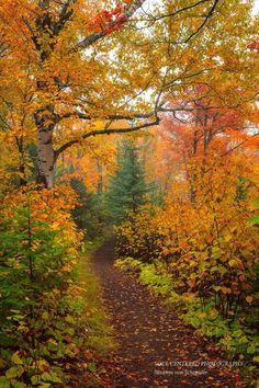 Autumn Nature, Autumn Forest, Autumn Day, Autumn Love, First Day Of Autumn, Happy Autumn, Autumn Morning, Fall Days, Dark Forest