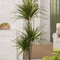 Viviendo verde minimalist living room | homify Marginata Plant, Minimalist Living, Wood Wood, Living Room Designs, Interior Design, Plants, House, Green, Nest Design