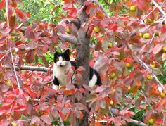 Spotsy up in the Brandywine crabapple tree among colorful fall leaves and yellow-green (and very bitter) crabs.