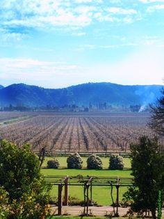 Curicó Valley, Chile vineyard. This is where the Cabernet Sauvignon grape grows to produce Toro de Piedra