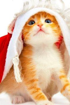 Yellow kitten :-)