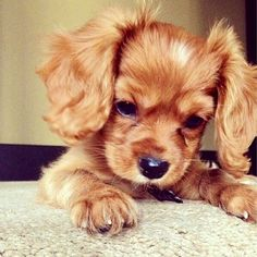 28 Dogs and Puppies Pictures
