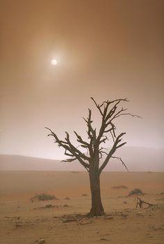 ✯ Tree in Namibian Desert