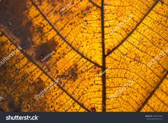Abstract Gold Leaf Texture Using Background ภาพสต็อก (แก้ไขตอนนี้) 786793768 Autumn Leaves Background, Leaf Background, Leaf Texture, Abstract, Travel, Image, Summary, Viajes, Trips