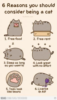 6 Reasons you should consider being a cat. 1. Free Food 2. Free Rent 3. Sleep as long as you want to 4. Look great with no effort 5. Toes look like beans 6. License to kill!!!