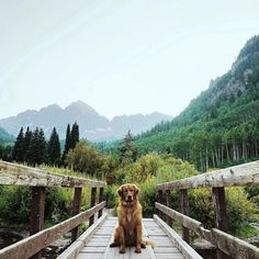 Aspen the mountain pup knows a thing or two about adventure.