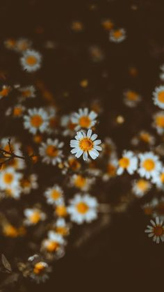 One of many great free stock photos from Pexels. This photo is about pollen, season, wallpaper Flores Wallpaper, Qhd Wallpaper, Daisy Wallpaper, Iphone Background Wallpaper, Tumblr Wallpaper, Cellphone Wallpaper, Aesthetic Iphone Wallpaper, Cool Wallpaper, Aesthetic Wallpapers