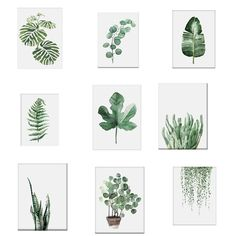 1 stück aquarell tropische pflanze verlässt leinwand kunstdruck poster nordic … watercolor tropical plant leaves canvas art print poster nordic green plant leaf rural wall pictures for home decoration new Plant Painting, Plant Drawing, Plant Art, Spray Painting, Plant Decor, Watercolor Plants, Watercolor Leaves, Watercolor Paintings, Leaf Paintings