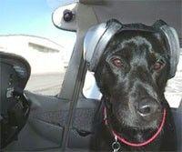 Dog Hearing Protection #aeromedix