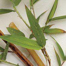 """""""Raikasta & puhdasta"""" Bambu tuulahdus Löydä sisäinen harmonia bambujen katveessa - raikkaita ja kasteisia aromeja. Todellinen irtiotto arjesta."""