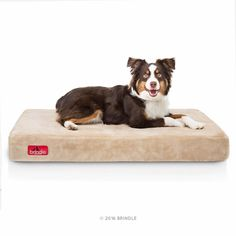Brindle 4 Inch Solid Memory Foam Orthopedic Dog Bed Review