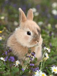 Throw Blanket Flannel Brown Flowers Cute Bunny Rabbit in Colorful Meadow Cute Baby Bunnies, Cute Baby Animals, Animals And Pets, Funny Animals, Cute Babies, Wild Animals, Brown Flowers, Pet Rabbit, Fluffy Rabbit