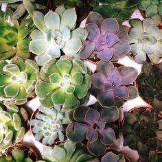 Вот такие замечательные #суккуленты есть в наличии, их можно приобрести как поштучно, так и с флорариумом. 🌵 #идеидляподарка #decorationidea #florarium #лофтмебель #цветывинтерьере #москвацветы #glassbox #свадьбадекор #loft #weddingstyle #orchids #lovefashion #золото #флористика #greenhouse #суккулент #кактус