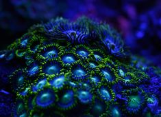 23 Fluorescent Coral Reefs Under UV Light