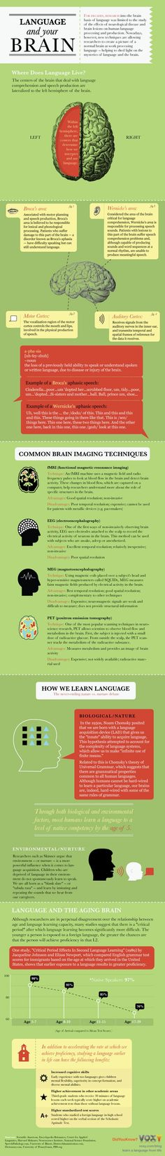 Richard Yates I have a brain injury mines Anoxic brain injury ;Infographic: Language and Your Brain - explains aphasia that can occur from a stroke or other brain injury Speech Pathology, Speech Language Pathology, Speech And Language, Speech Therapy, Learning Tips, Mobile Learning, Aphasia, Dyslexia, Second Language