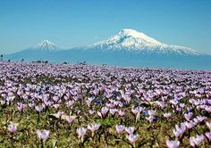 Biblical Mountain ArArAt. ARMENIA