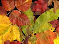 wallpapernarium: hojas secas