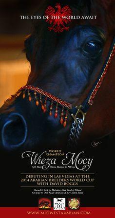 World Champion * Wieza Mocy and David Boggs aim for the Las Vegas World Cup :: Arabian Horses, Stallions, Farms, Arabians, for sale - Arabia...