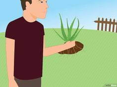 3 Ways to Revive a Dying Aloe Vera Plant - wikiHow
