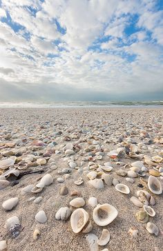 Shell Beach - The beaches on Sanibel Island in Florida are a great place to look for sea shells. While you are there be sure to check out the Bailey-Matthews National Shell Museum. Shell Beach, Ocean Beach, Glass Beach, Beach Waves, Magic Places, Places To Go, I Love The Beach, Pretty Beach, Sanibel Island