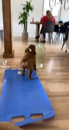 Funny Bunnies, Cute Funny Animals, Cute Baby Animals, Cute Dogs, Funny Laugh, Wtf Funny, Fun Moves, Dog Comics, Hydraulic Press Channel