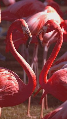 Heart of Flamingo  J'aime cette œuvre, car pour moi ça représente l'amour pour les humains ou les animaux. La couleur est belle parce qu'elle représente aussi la couleur de l'amour.