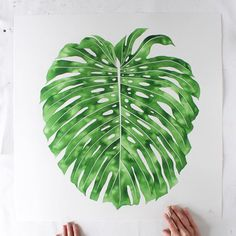 """Just call me """"Mother of Monsteras"""" Custom """"Monstera for Ashleigh"""" watercolor on cotton paper.  24x24 inch Currently on its way to Australia where they have a lot of these from what I've heard! If it's tropical there I know I'd love it. Got a lil video up in case you wanted to see my new """"Sword Ferns"""" print packaged and the box they arrive in! Have sold through 25 of the 50, so grab one of you want one. It is a small run limited edition print! Link in bio."""