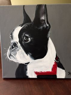 Fantastic Boston terrier