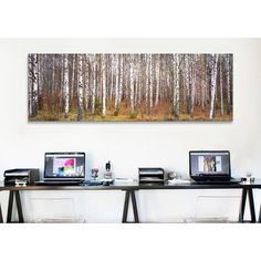 iCanvas Panoramic Birch Trees in a Forest Photographic Print on Wrapped Canvas | AllModern