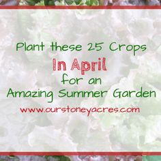 12 quick-growing vegetables to plant when the stores are empty! - Our Stoney Acres 12 quick-growing Growing Green Beans, Tips For Growing Tomatoes, Growing Vegetables, Building A Raised Garden, Raised Garden Beds, Growing Shallots, Canned Pickled Beets, Cucumber Trellis, Drip Irrigation System