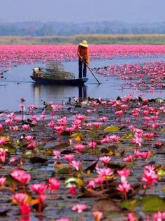 Water lilies, Lake Nong Harn, Thailand