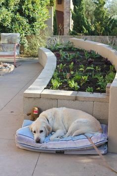 Concrete cinder block garden topped with cheap concrete pavers makes it look polished - use for the raised garden bed in the front? Cinder Block Garden, Cinder Blocks, Cinder Block Ideas, Cinder Block Fire Pit, Ideas Terraza, Concrete Pavers, Diy Concrete, Concrete Blocks, Concrete Garden