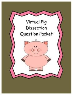 ***FREEBIE***  Pig dissection web quest!!  Easy to use and kids love it!  Great preview to a real pig dissection!