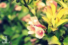 Sommergefühle - Rosa Blüte