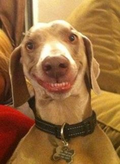 Lächelnder Hund | Smini